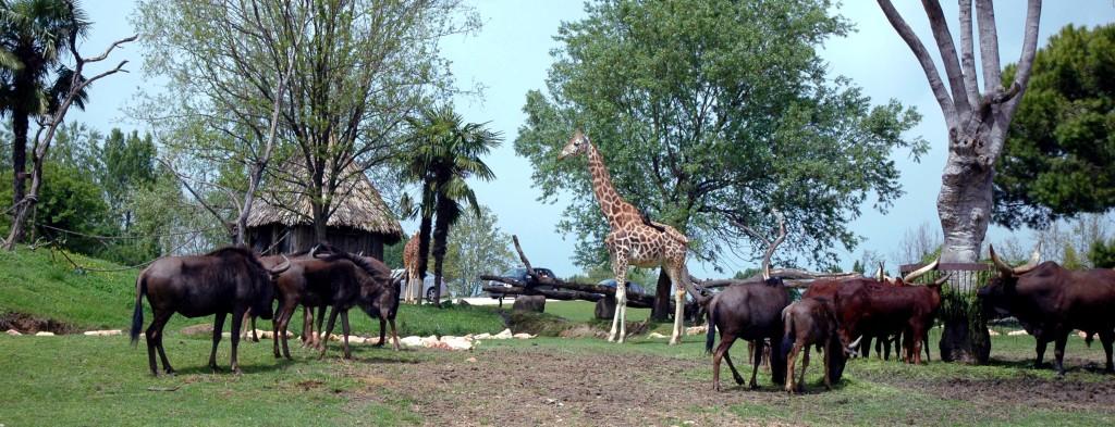 parco natura viva verona video tour - photo#23