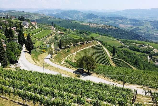 wine-wankers-allegrini-wine-valpolicella-amarone-vineyards