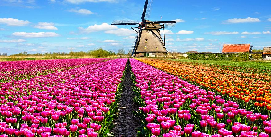 Haarlem, un weekend low cost nella caratteristica città dei fiori