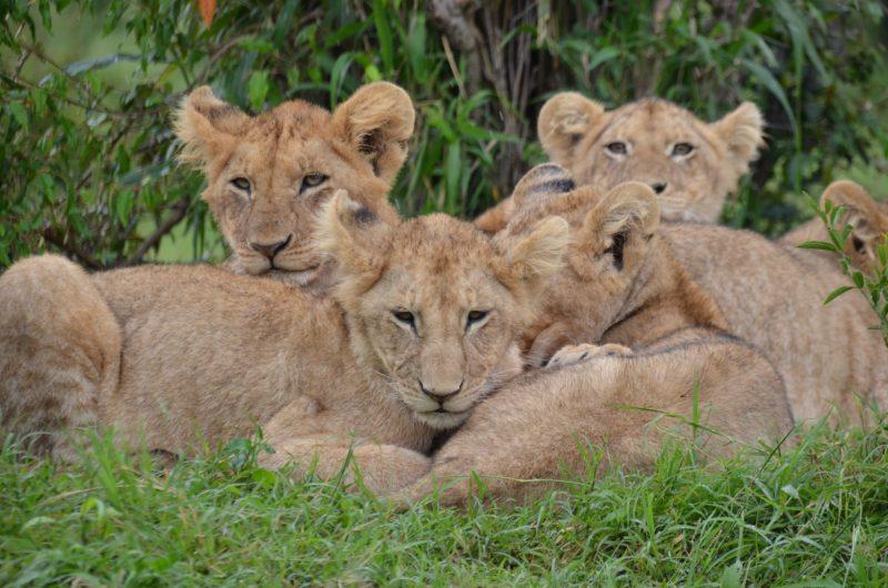 Kenya natura