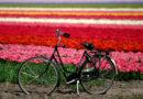 In Olanda tra bici e tulipani