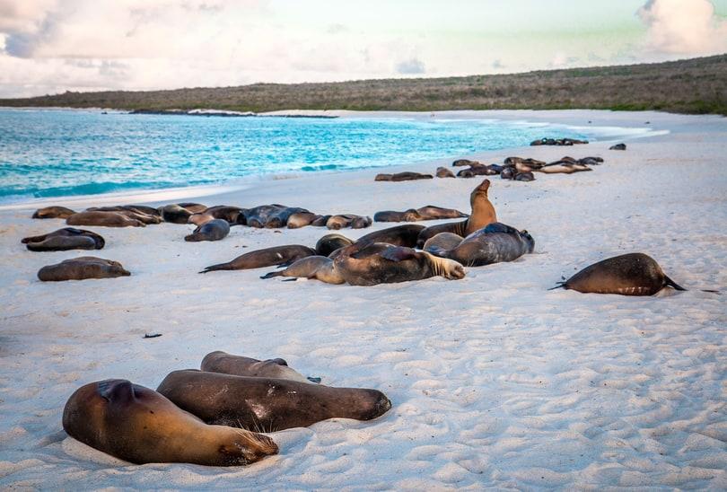 Leoni marini alle Galapagos