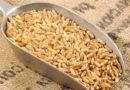 Il kamut, la farina degli antichi Egizi. Provala nella nostra torta con pere, mele e ricotta
