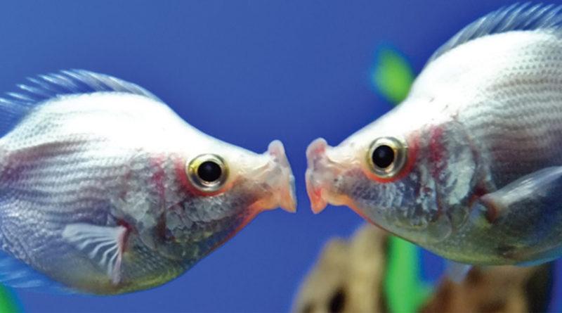 Appuntamenti acquario pesci cuspide