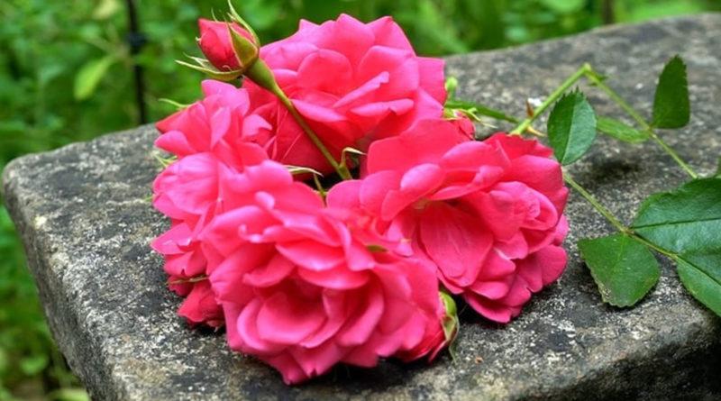 stretto rosa micio ottenere scopata