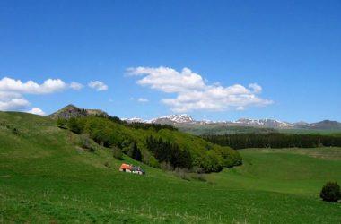 Alvernia