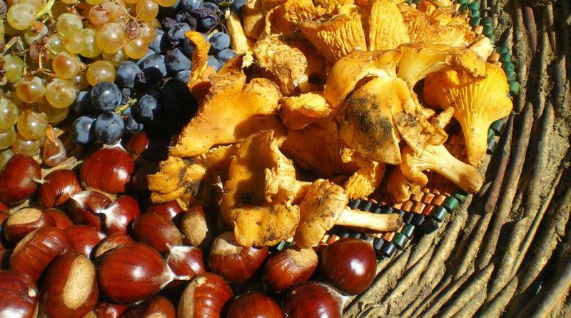 funghi peruviani per perdere peso quekimatzuthl usa