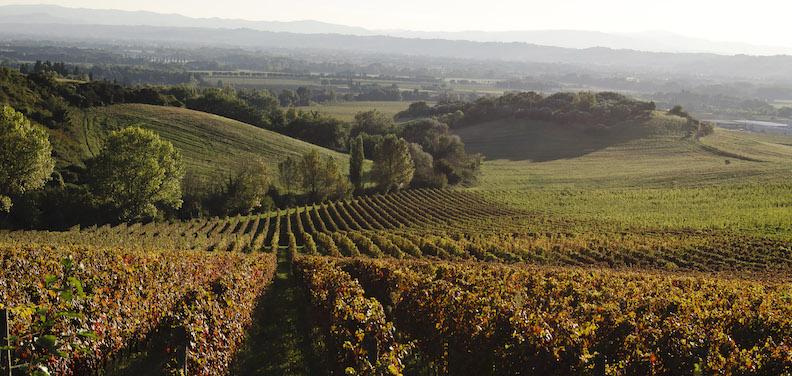 Una meravigliosa immagine della vigna Monticchio in autunno.
