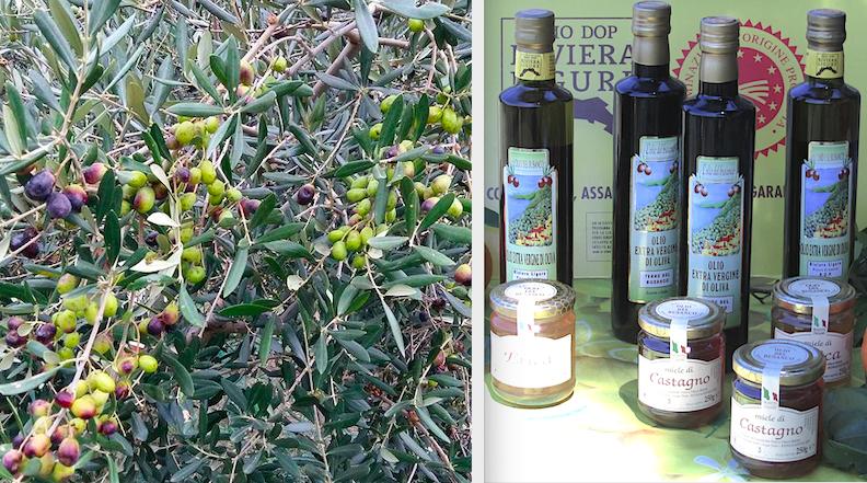 il miele di castagno e l'olio ottenuto dalle olive del Busanco